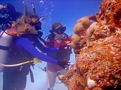 Soft Corals (DivePhoto) Tags: coral divers dad scuba