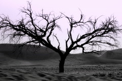 Ai piedi della duna 45 (doniflo) Tags: tramonto cielo sole albero namibia vento rami storia arterie sossulvei duna45