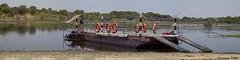Kumaga ferry crossing Boteti river (Zsuzsa Poór) Tags: africa panorama ferry wildlife botswana makgadikgadi wildlifeafrica canonistas botetiriver canoneos7d kumaga canonef70200mmf28lisusmii