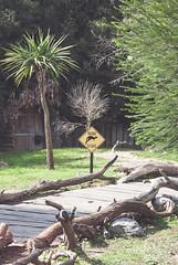 (https://marketplace.500px.com/marief) Tags: life road wild nature animals sign zoo wildlife kangaroo wallabies