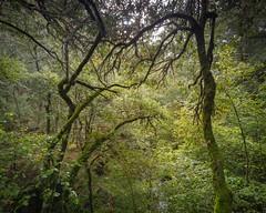 Bailemos (Qasarxl) Tags: trees espaa tree forest spain rboles bosque rbol len bierzo elbierzo quintanadefuseros