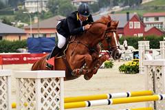 Philippe Le Jeune riding Loro Piana Andretti (yasminabelloargibay) Tags: horse caballo cheval mare chestnut cavalier cavallo cavalo pferd equestrian stallion equine csi hest paard showjumping hpica horserider gelding showjumper equestrianism equitacion hipismo philippelejeune