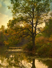 River Cove in Autumn (scilit) Tags: autumn trees sky nature grass river landscape pier scenery ngc cover lilypads grandriver tistheseason topshots natureselegantshots tisexcellence thebestofmimamorsgroups sailsevenseas theoriginalgoldseal