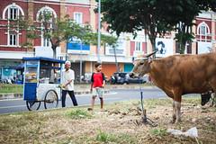 35 (Garry Andrew Lotulung) Tags: street portrait bw monochrome canon children indonesia cow blackwhite child muslim islam religion goat oldman human kambing adha humaninterest sapi tangerang idul eidmubarak iduladha canon7d