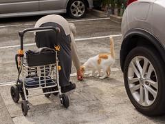 Cat and feeder (kasa51) Tags: japan cat oldwoman 猫 ねこ atami ネコ 静岡県熱海市