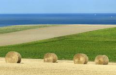 Cte d'Opale, paysage agricole (Ytierny) Tags: mer france horizontal paysage manche champ foin pasdecalais graphisme littoral meule ctedopale agricole boulonnais sitedesdeuxcaps ytierny