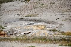 Sprinkler Geyser (16 August 2014) 2 (James St. John) Tags: hot castle volcano spring group basin upper sprinkler springs yellowstone wyoming geyser geysers