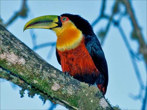 Birding in Itamonte