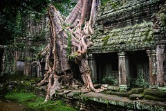 The Intruder (Trent's Pics) Tags: tree temple ruins cambodia fig monastery siemreap preahkhan stranglerfig