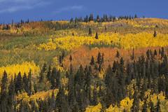 kaleidoscope (Jeff Mitton) Tags: mountains landscape colorado fallcolors rockymountains wilderness aspen quakingaspen wondersofnature earthnaturelife