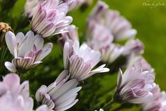 Flower (116) (-j0n4s-) Tags: flowers white flower color green art nature flickr purple