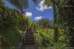 Tropical Hawaii (sathellite) Tags: nature hawaii rainforest evolution maui hana bigisland hilo tropics kona tropicalrainforests