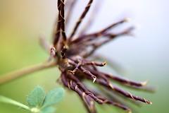 Macro (kellimatthews) Tags: flower macro