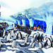 "Antarctica Penguins • <a style=""font-size:0.8em;"" href=""https://www.flickr.com/photos/76781152@N08/15446907226/"" target=""_blank"">View on Flickr</a>"