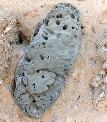 Origins revealed (gordontour) Tags: building archaeology coral stone architecture construction ancient gulf uae historic arabian rak unitedarabemirates rasalkhaimah