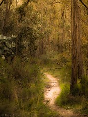 "Australian impressionism • <a style=""font-size:0.8em;"" href=""http://www.flickr.com/photos/44919156@N00/15456716665/"" target=""_blank"">View on Flickr</a>"