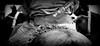 Un buen facón (Eduardo Amorim) Tags: horses horse southamerica criollo caballo uruguay cheval caballos belt whip cavalos prado cinto montevideo pferde cavalli cavallo gauchos pferd chevaux gaucho tirador cintura 馬 américadosul beijos ceinture montevidéu uruguai gaúcho amériquedusud лошадь gürtel gaúchos 马 suramérica américadelsur südamerika crioulo caballoscriollos escamoso criollos حصان pilchas pilchasgauchas rastra americadelsud culero rebenque crioulos cavalocrioulo americameridionale caballocriollo campeiros campeiro eduardoamorim cavaloscrioulos pasomolinosudamérica mealegroportumadre suerteentuspruebas