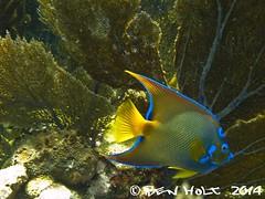 (Ben holt) Tags: fish coral keys underwater florida g scuba diving cannon keylargo g10 benholt queenangle