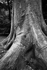 (fpierantoni) Tags: blackandwhite bw italy università bn botanico piante bianconero botanica biancoenero padova padua veneto orto ©francescomariapierantoni