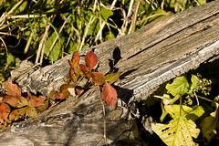 0141HCGb (preacher43) Tags: autumn macro tree nature canal illinois hennepin geneseo