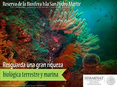 san-pedro-1 (SEMARNAT) Tags: california mxico mexico san pedro isla sanpedro golfo martir sanpedromartir golfodecalifornia