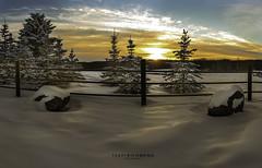 Prairie Sunset (Terry L Richmond) Tags: httpsfacebookcomtrichmondphotography sunset clouds snow pine trees backlit canon6d canon1740 alberta canada fence