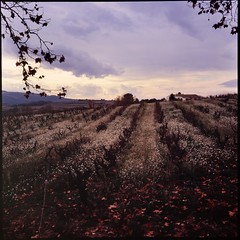 Vineyard in winter (davidgarciadorado) Tags: winter clouds wineyard flowers farm diapositive 6x6 slide reversal velvia rolleiflex planar