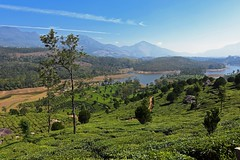 Munnar (kailas bhopi) Tags: munnar teaestate teagarden tea landscape nature nikond7200withtokina1116 tokina tokina1116 keralatourisum kerala travelindia india green cloudscape