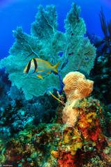 Corals (jnhPhoto) Tags: belize2017 jnhphoto scuba scubadiving ocean belize coral corals colorful underwater