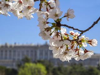 Primavera Real