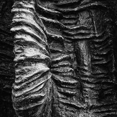 Texture (Studio fotoplastikon) Tags: yashica blackandwhite monochrome abstract