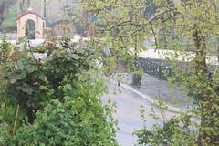Ψίνθος (Psinthos.Net) Tags: ψίνθοσ psinthos march spring μάρτησ μάρτιοσ άνοιξη φύση nature springstorm ανοιξιάτικηκαταιγίδα καταιγίδα μπόρα storm σταγόνεσβροχήσ σταγόνεσ raindrops drops raining βρέχει βροχή rain road δρόμοσ wetroad βρεγμένοσδρόμοσ chapel εκκλησάκι άγιοσνικόλασ άγιοσνικόλαοσ saintnicolas cross σταυρόσ γεφύρι άνθη blossoms μπουμπούκια buds rosebuds τριανταφυλλιά τριαντάφυλλα roses rosebush pinkroses ρόζτριαντάφυλλα βρύση βρύσηψίνθου βρύσηψίνθοσ περιοχήβρύση vrisi vrisiarea vrisipsinthos planetree πλάτανοσ δέντρο tree ευκάλυπτοσ eucalypt πετρόχτιστοστοίχοσ stonewall πετρόχτιστο valley psinthosvalley κοιλάδα κοιλάδαψίνθου κοιλάδαψίνθοσ