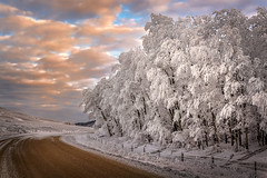 Frosty Trees (mnenson) Tags: timeofday weatherphenomena nature frost weather seasons winter sunset trees cypresshillsinterprovincialpark phototype alberta sunsets architecture parks environment places canada climate