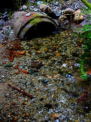 Culvert (Chancelrie) Tags: outdoor plant pacificnorthwest vancouver britishcolumbia kitsilano