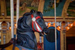 The Wonderful Dark Horse