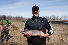 Forsythe Fish-7