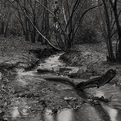 Swithland wood (marc_leach) Tags: landscape woods stream mono blackandwhite tree leicestershire swithland nikon d200