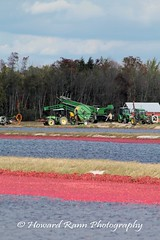 Whitesbog Cranberry Harvest  (61) (Framemaker 2014) Tags: whitesbog cranberry harvest burlington county chatsworth new jersey pinelands pine barrons southern united states america