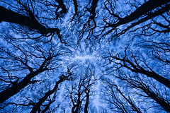 Through the trees (andyk11) Tags: trees beech bronze bowl barrow wingreen blue silhouette andyknowles wiltshire england mystical haunting