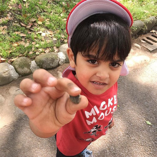 Collecting rocks for an art project at Star Kids International Preschool, Tokyo. #starkids #international #preschool #school #children #kids #kinder #kindergarten #daycare #fun #shibakoen #minatoku #tokyo #japan #instakids #instagood #twitter #子供 #幼稚園 #保育