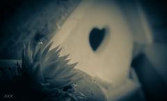 I don't know much (babs van beieren) Tags: 7dwf macrowednesday birdhouse heart love sempervivum monochrome flower plant