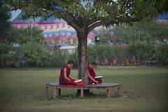 NPL - Lumbini 26 (VesperTokyo) Tags: lumbini nepal pagoda temple tibetanbuddhism budha buddha budhsim budism buddism budist religion ルンビニ ネパール 仏教 釈迦牟尼 仏陀 ブッダ 仏像 釈尊 仏教徒 nepalese pilgrims monks 巡礼地 巡礼者 ネパール人 reading nikond3 asia unescoworldheritagesite 世界遺産 birthplaceofthelordbuddha 仏陀の生誕地