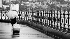 Warren Purnell Photography (wozzinozz) Tags: luggage monochrome white black woman sydney harbour bridge city umbrella rain overcast harbourside wrought iron fence raining pier one