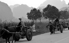 Tyres and oxen (Juæn) Tags: vietnam ox buey rueda neumatico tyre blackwhite blancoynegro streetphotography calle campo campesino farmer