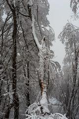 Snowy day in Altiaghaj (Ilkin Kangarli) Tags: caucasus azerbaijan khizi mountains winter snow forest february frost кавказ азербайджан хызы горы зима снег лес мороз февраль