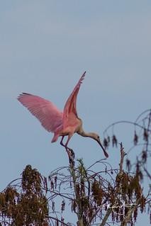 Pink landing.