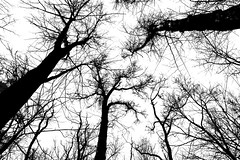 Waiting For Warmer Days (thetrick113) Tags: stonykillfarm dec newyorkstatedec fishkillnewyork sky blackandwhite sonyslta65v hudsonvalley hudsonrivervalley hike hiking sierratrail trail trees winter 2017 winter2017 deciduous dicot