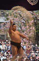 Sumo Champion Hakuho Purifying the Ring (Ronin Dave) Tags: sumo outdoorsumo salt japan japaneseculture hakuho yokozuna ritual shinto tokyo yasukunishrine honozumo sports japanesesports japanesefestival onlyinjapan