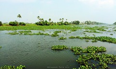 Growth in the Backwaters (Shrayansh Faria Photography) Tags: waters backwaters green lush