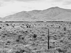 SP, Oscura, New Mexico, 1987 (railphotoart) Tags: stillimage oscura newmexico unitedstates